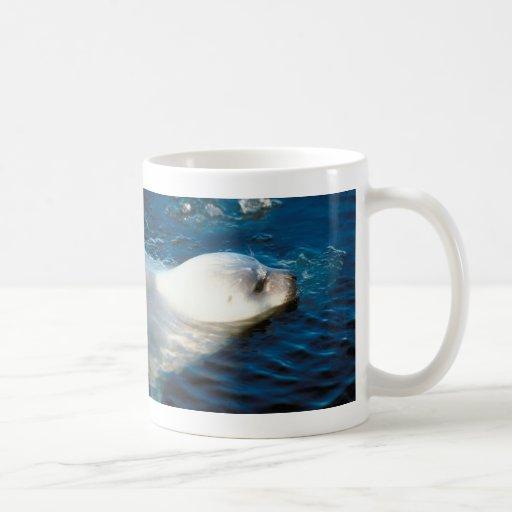 Natación del sello tazas de café