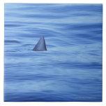 Natación del tiburón en agua del océano azulejo cuadrado grande
