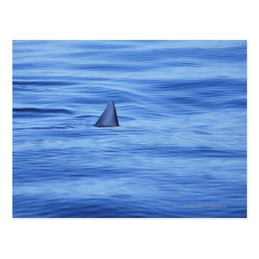 Natación del tiburón en agua del océano tarjeta postal