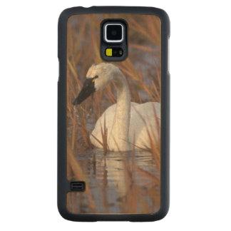Natación en una charca, 1002 Coastal del cisne que Funda De Galaxy S5 Slim Arce