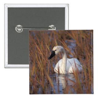 Natación en una charca, 1002 Coastal del cisne que Pin Cuadrada 5 Cm