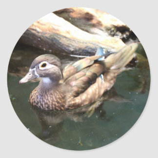 Natación femenina del pato de madera pegatina redonda