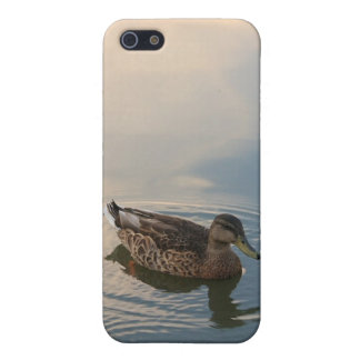 Natación femenina del pato del pato silvestre iPhone 5 carcasas
