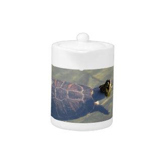 Natación flotante de la tortuga en una charca