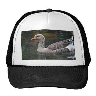 natación gris del ganso a través de la imagen del  gorra
