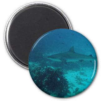 Natación gris del tiburón del filón imán redondo 5 cm