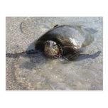 Natación hawaiana de la tortuga de mar verde en la postal