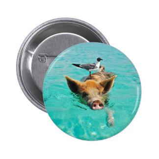 Natación linda del cerdo en agua pin