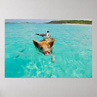 Natación linda del cerdo en agua póster