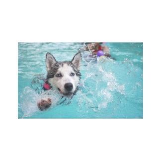 Natación linda del perro en piscina impresion de lienzo
