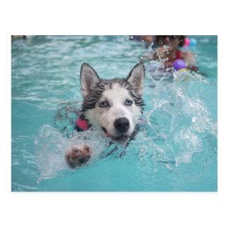 Natación linda del perro en piscina tarjeta postal