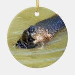 Natación norteamericana del castor adorno navideño redondo de cerámica