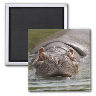 Natación pesada del Hippopotamus en el parque zool Imán Para Frigorífico