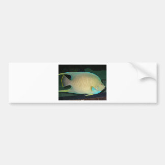 Natación tropical Azul-Moreno-Verde de los pescado Pegatina Para Auto