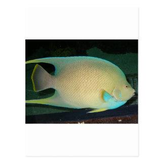 Natación tropical Azul-Moreno-Verde de los pescado Postales