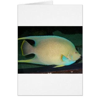 Natación tropical Azul-Moreno-Verde de los pescado Tarjeta De Felicitación