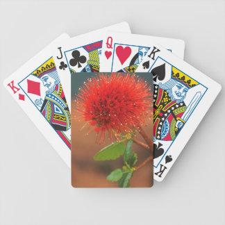 Natal Bottlebrush (Greyia Sutherlandii) Flower Bicycle Playing Cards