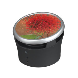 Natal Bottlebrush (Greyia Sutherlandii) Flower Bluetooth Speaker