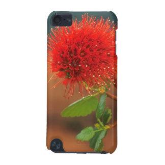 Natal Bottlebrush (Greyia Sutherlandii) Flower iPod Touch (5th Generation) Cases