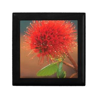 Natal Bottlebrush (Greyia Sutherlandii) Flower Gift Box