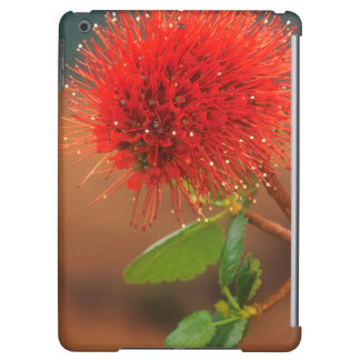 Natal Bottlebrush (Greyia Sutherlandii) Flower iPad Air Case