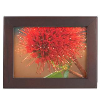 Natal Bottlebrush (Greyia Sutherlandii) Flower Memory Box