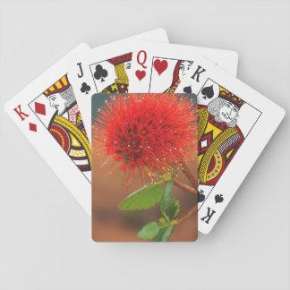 Natal Bottlebrush (Greyia Sutherlandii) Flower Poker Deck