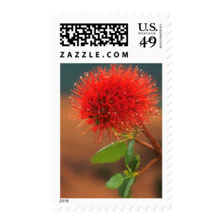 Natal Bottlebrush (Greyia Sutherlandii) Flower Stamp