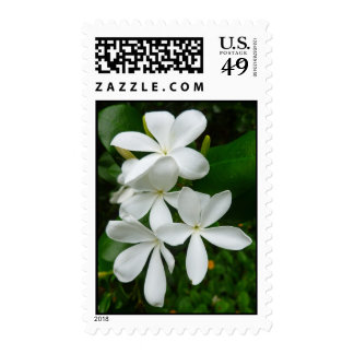 Natal Plum Blossoms Postage Stamps
