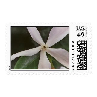 Natal Plum Flower Postage Stamp