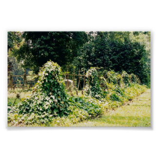 natchez graveyard1 impresiones