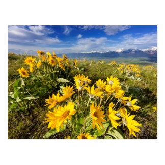 National Bison Range Postcard