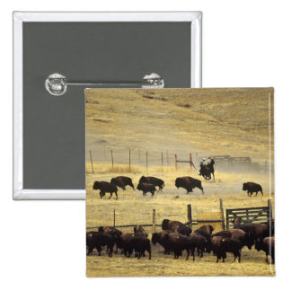 National Bison Range Roundup in Montana 2 Inch Square Button