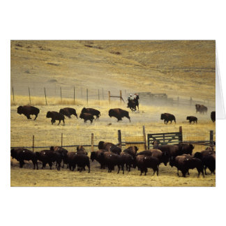 National Bison Range Roundup in Montana Card