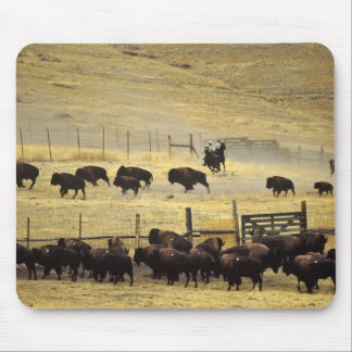 National Bison Range Roundup in Montana Mouse Pads