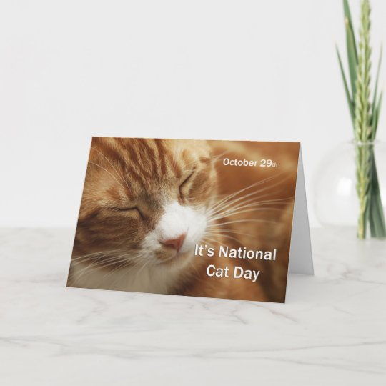 National Cat Day October 29 Card Zazzle Com