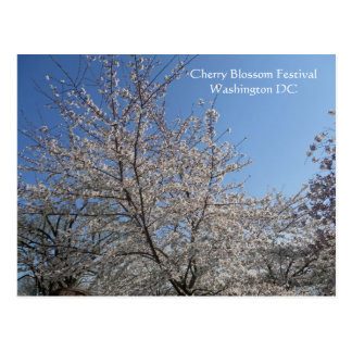 National Cherry Blossom Festival Washington DC 001 Postcard