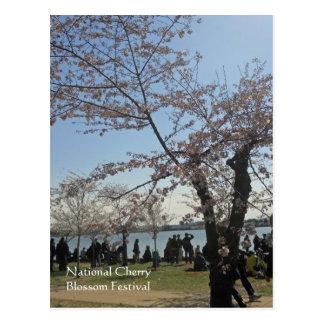 National Cherry Blossom Festival Washington DC 002 Postcard