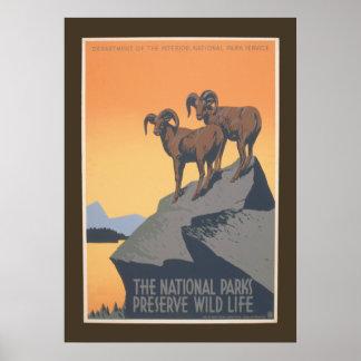 National Park - Preserve Wildlife Vintage 20 x 28 Poster