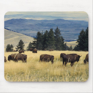National Parks Bison Herd Mouse Pad
