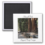 National Parks - Sequoia/Kings Canyon Magnet