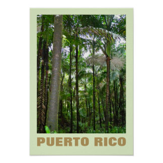 National Rainforest, Puerto Rico Poster