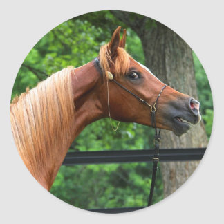 National Show Horse Classic Round Sticker