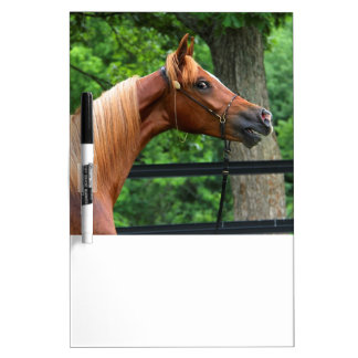 National Show Horse Dry-Erase Board