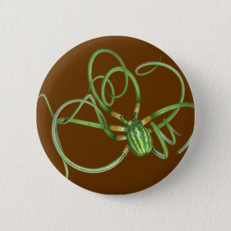 National Watermelon Day Octopus Button