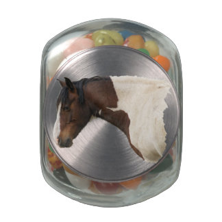 Native American Paint Horse Horse Equine Photo Jelly Belly Candy Jar