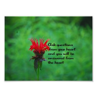 Native American Proverb Photo Print