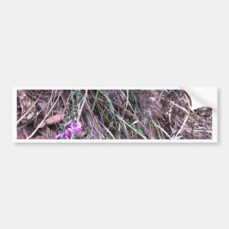 Native Australian wild grasses in flower Bumper Sticker