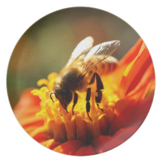 Native Bee in an Orange Flower Melamine Plate