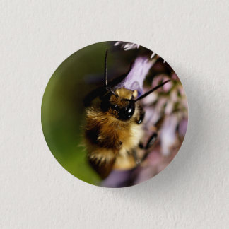 Native Bee on a Purple Flower Button
